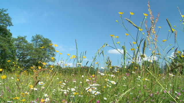 ws pan meadow with blooming flowers / vrhnika, slovenia - vrhnika stock videos and b-roll footage