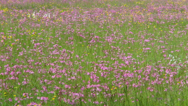 ws meadow with blooming flowers / vrhnika, slovenia - vrhnika stock videos and b-roll footage