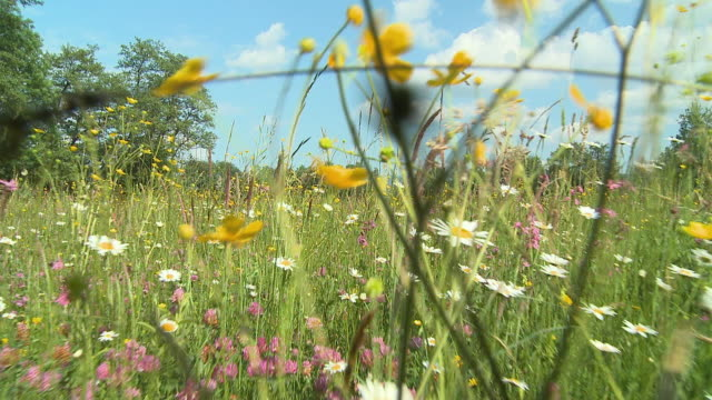 ws pov meadow with blooming flowers / vrhnika, slovenia - vrhnika stock videos and b-roll footage