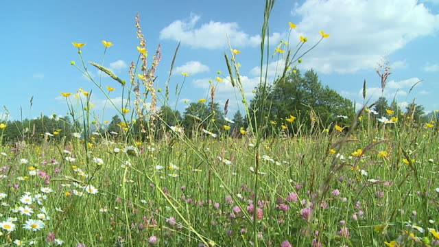 ws pan slo mo meadow with blooming flowers / vrhnika, slovenia - vrhnika stock videos and b-roll footage