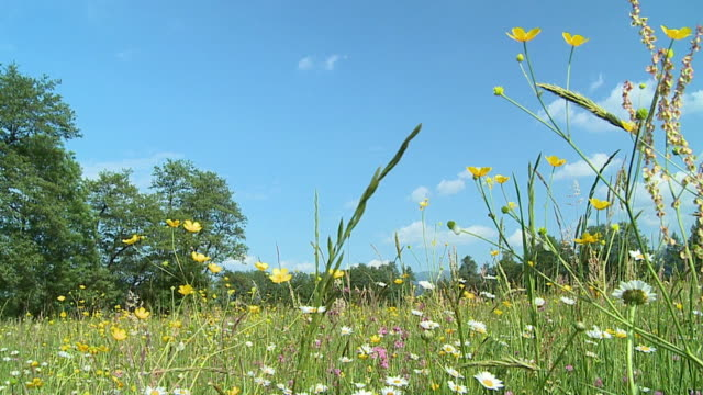 ws pan tu td slo mo meadow with blooming flowers / vrhnika, slovenia - vrhnika stock videos and b-roll footage