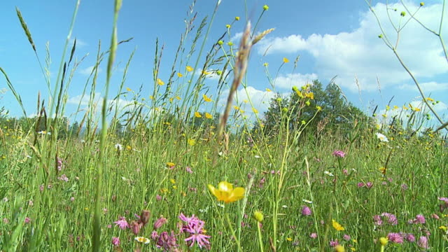 ws pov slo mo meadow with blooming flowers / vrhnika, slovenia - vrhnika stock videos and b-roll footage