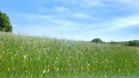 vídeos y material grabado en eventos de stock de prado con cielo azul. - hierba familia de la hierba