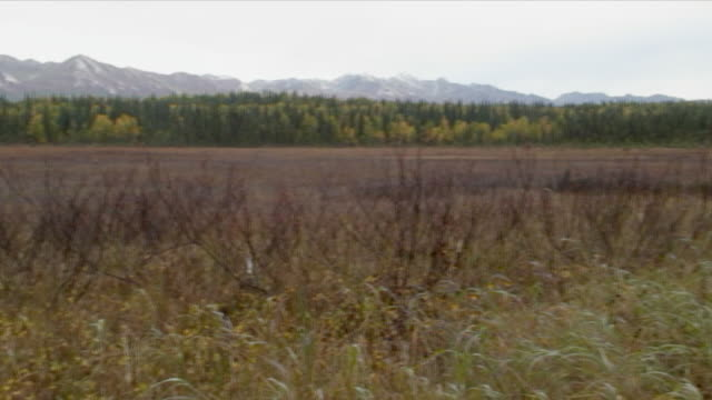 ws pan meadow with forest and mt. mckinley range / byers lake, alaska, usa - alm stock-videos und b-roll-filmmaterial