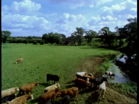 meadow with river on right, cows in river, high angle, england, uk - cattle stock videos & royalty-free footage