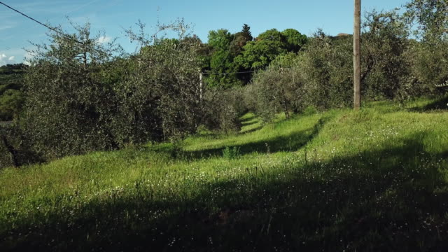 vídeos de stock, filmes e b-roll de meadow with trees - umbria