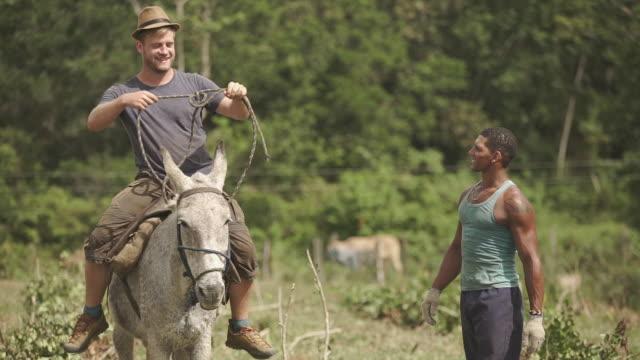 stockvideo's en b-roll-footage met gemiddelde het leren om een paard te berijden - werkdier