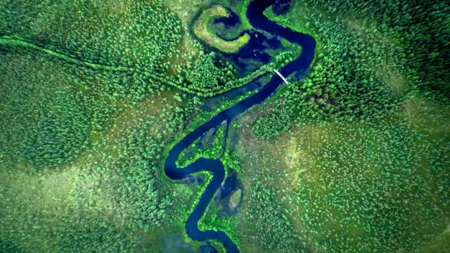 空から見た。曲がりくねった川を寒帯林 - 寒帯林点の映像素材/bロール