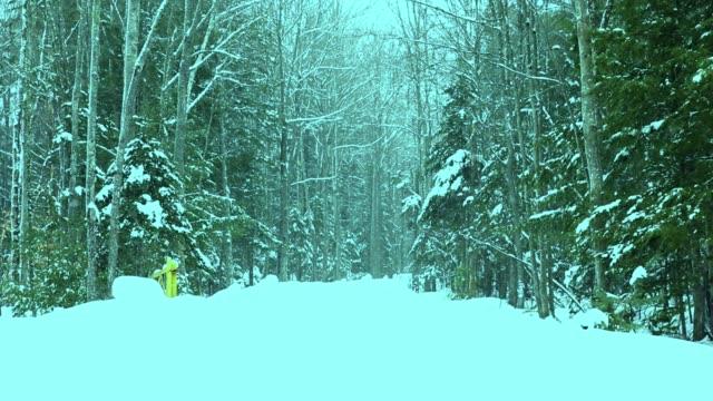 Unterdessen in einem Wald in Maine.