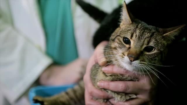 Messung der Körpertemperatur, kranke Katze tierärztliche Klinik