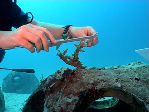 Measuring coral growth on Artificial Cement Reef Balls, Maldives