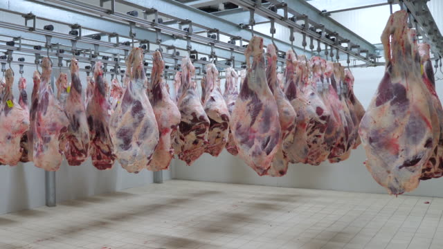 meat cutting and processing factory, supervising and expert engineer control. - butcher stock videos & royalty-free footage