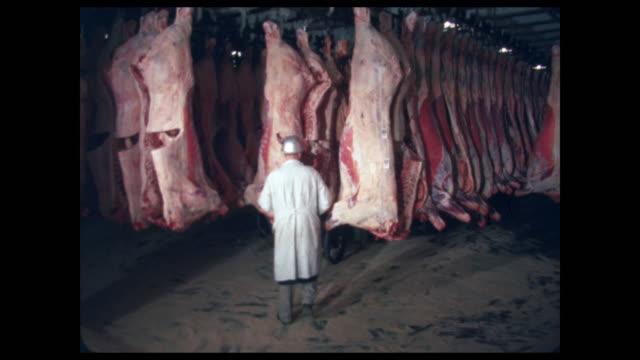 vidéos et rushes de meat inspection - man inspecting hanging beef carcasses - qualité