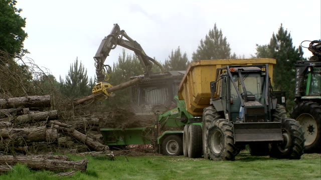 ms mechanical arm liftting logs into chipping machine / cranbrook, kent, united kingdom - forestry industry stock videos & royalty-free footage