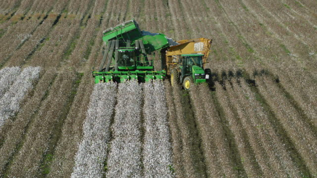 mechanical cotton picker unloads cotton - cotton stock videos and b-roll footage