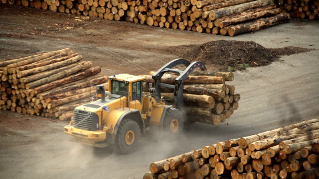 mechanical grabber at deforestation lumberyard picton new zealand - timber yard stock videos & royalty-free footage