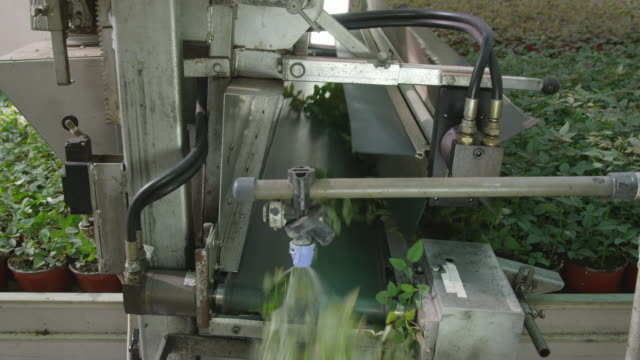 mechanical trimmer cutting leaves off the top of pot plants in industrial nursery, red r3d 4k - 金銭に関係ある物点の映像素材/bロール