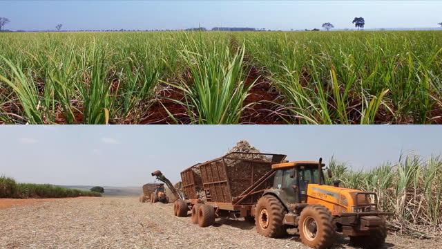 vídeos de stock e filmes b-roll de mechanized harvesting of sugar cane plantation in sao paulo country side, brazil - preto