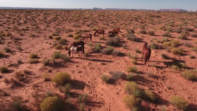 med orbit right to left wild horses, drone aerial 4k, monument valley, valley of the gods, desert, cowboy, desolate, mustang, range, utah, nevada, arizona, gallup, paint horse .mov - paint horse stock videos & royalty-free footage