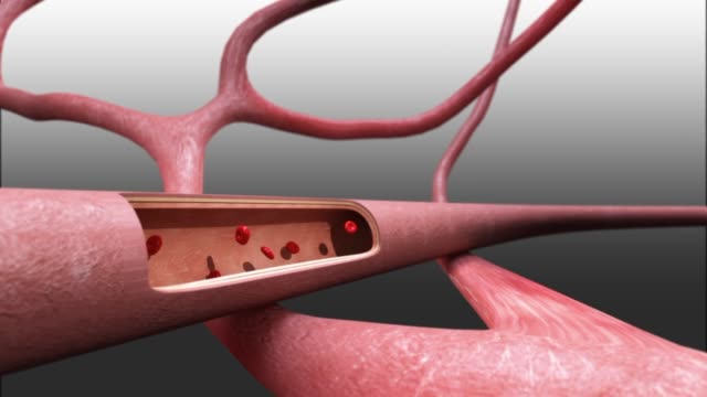 3d medical animation - blood vessel - artery stock videos & royalty-free footage