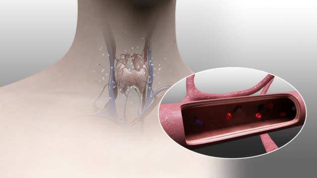 3d medical animation - blood vessels in thyroid - neck stock videos & royalty-free footage