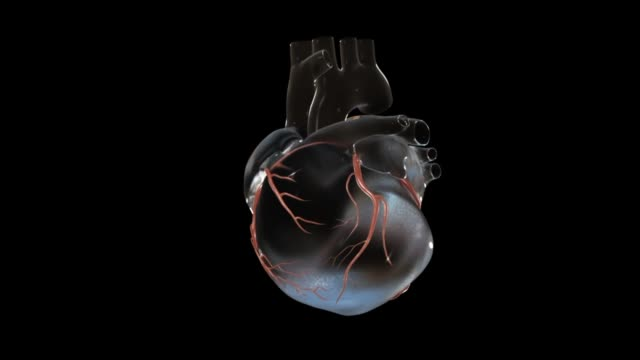 3d medical animation - coronary arteries - atrium heart stock videos & royalty-free footage