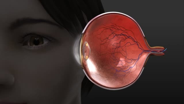 3d medical animation - eye anatomy - cranial nerve stock videos & royalty-free footage