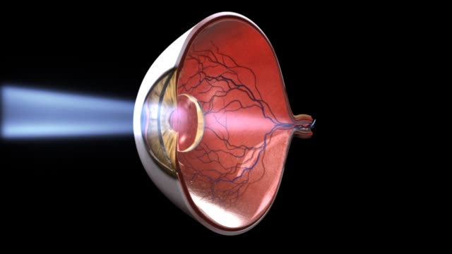 3d medical animation - function of iris - human internal organ stock videos & royalty-free footage