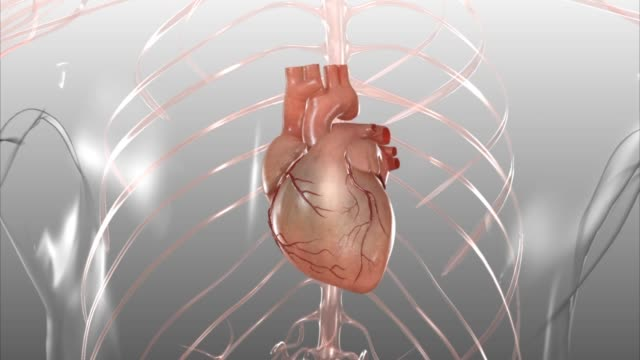 3d medical animation - human heart - anatomy stock videos & royalty-free footage