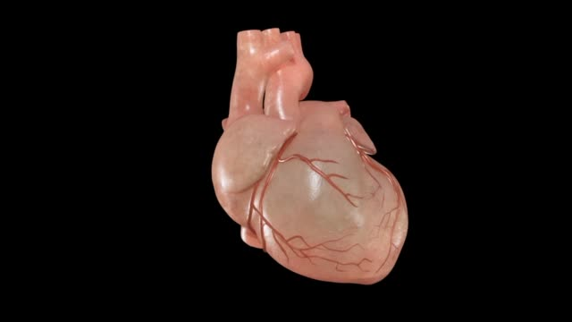 3d medical animation - human heart - human heart stock videos & royalty-free footage