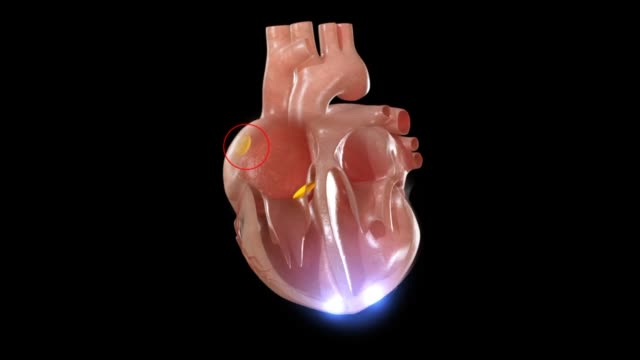 3d medical animation - human heart - atrium heart stock videos & royalty-free footage