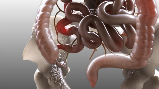 3d medical animation - large intestine - human small intestine stock videos & royalty-free footage