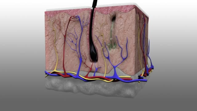 vídeos y material grabado en eventos de stock de 3d medical animation - layer of the epidermis - piel partes del cuerpo