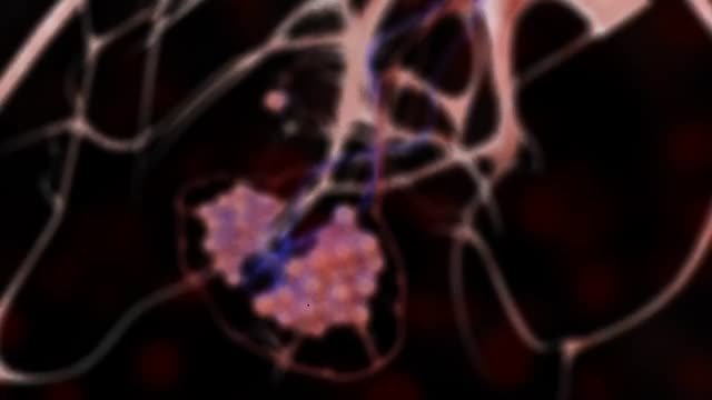 3d medical animation - lungs and alveoli - biomedical animation stock videos & royalty-free footage