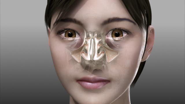 3d medical animation - nasal bones - biomedical animation stock videos & royalty-free footage
