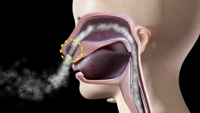 3d medical animation - nasal cavity - inhaling stock videos & royalty-free footage