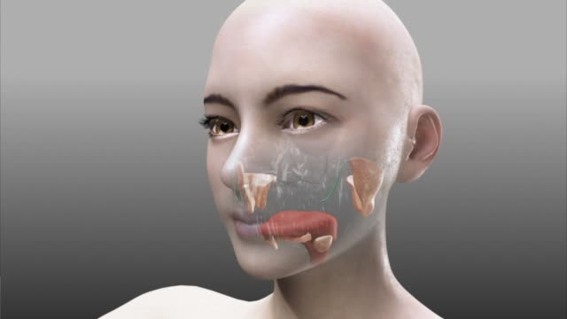 vídeos de stock, filmes e b-roll de 3d medical animation - oral cavity - animação digital