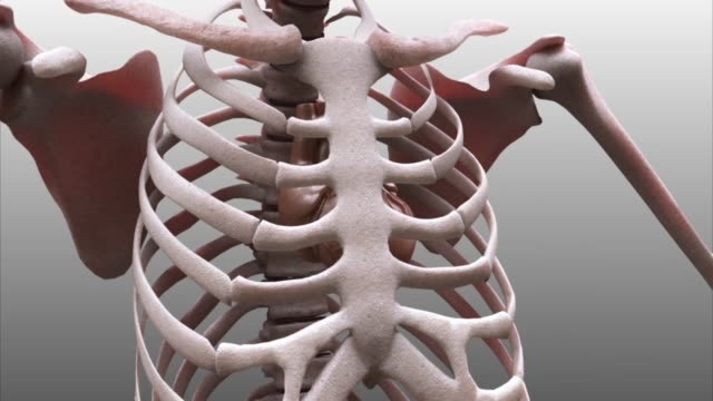 3d medical animation - rib cage - brustkorb menschlicher knochen stock-videos und b-roll-filmmaterial