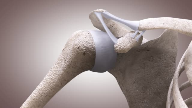 3d medical animation - shoulder joint - sternum stock videos & royalty-free footage