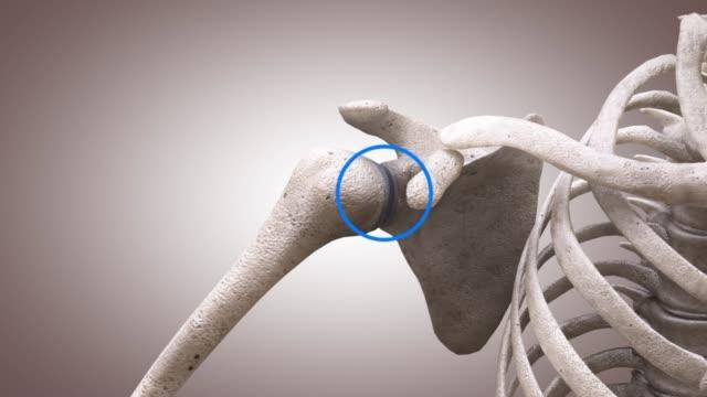 3d medical animation - structure of shoulder bones - sternum stock videos & royalty-free footage