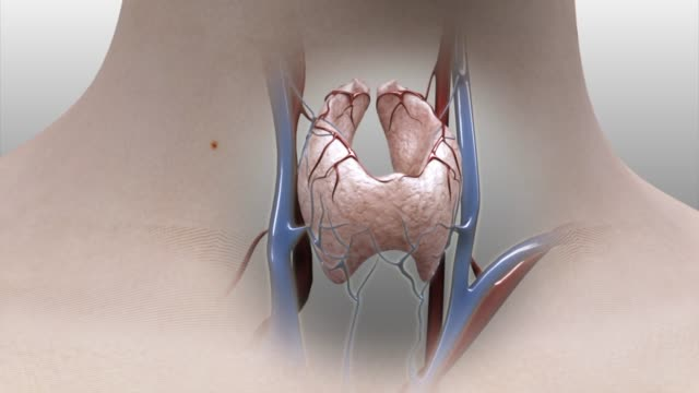 3d medical animation - thyroid anatomy - biomedical animation stock videos & royalty-free footage