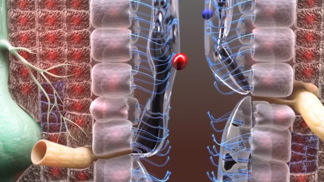 3d medical animation - trachea (windpipe) - lymphsystem stock-videos und b-roll-filmmaterial