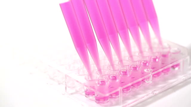 medical elisa test - pipette stock videos & royalty-free footage