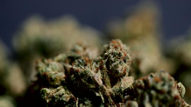 vídeos y material grabado en eventos de stock de marihuana medicinal - 4k - marihuana hierba de cannabis
