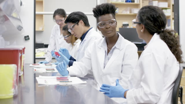 medical research team analyzing samples in a laboratory - biotechnology stock videos & royalty-free footage