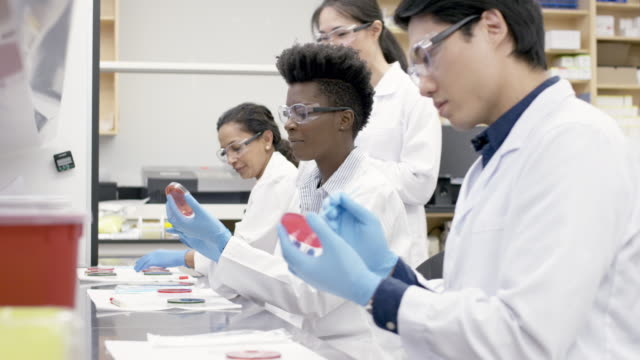 medical research team analyzing samples in a laboratory - medical sample stock videos & royalty-free footage