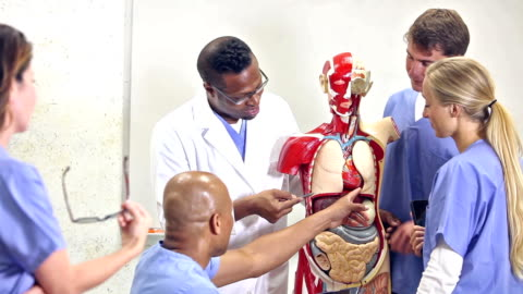 medical students in anatomy class with instructor - biology stock videos & royalty-free footage