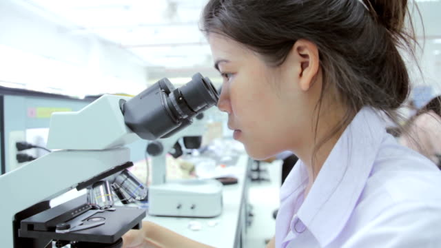 medical students using a microscope to see bacteria - microscope slide stock videos and b-roll footage