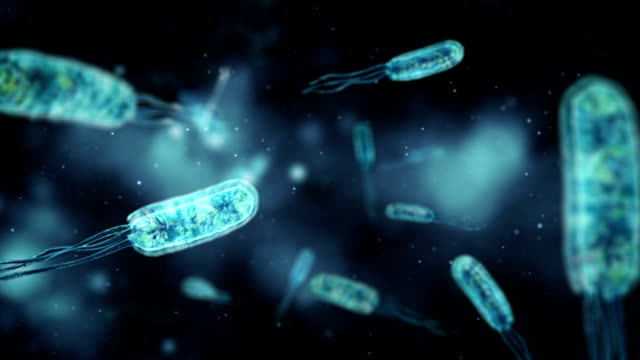 stockvideo's en b-roll-footage met medical video background - coli bacteria - microbiologie