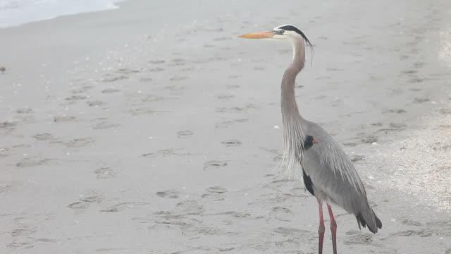 meditating heron - heron stock videos & royalty-free footage